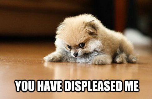 4c4c9d10b001c43aa81191581380f898 vote cutest angry puppy contest puppy meme, meme and animal