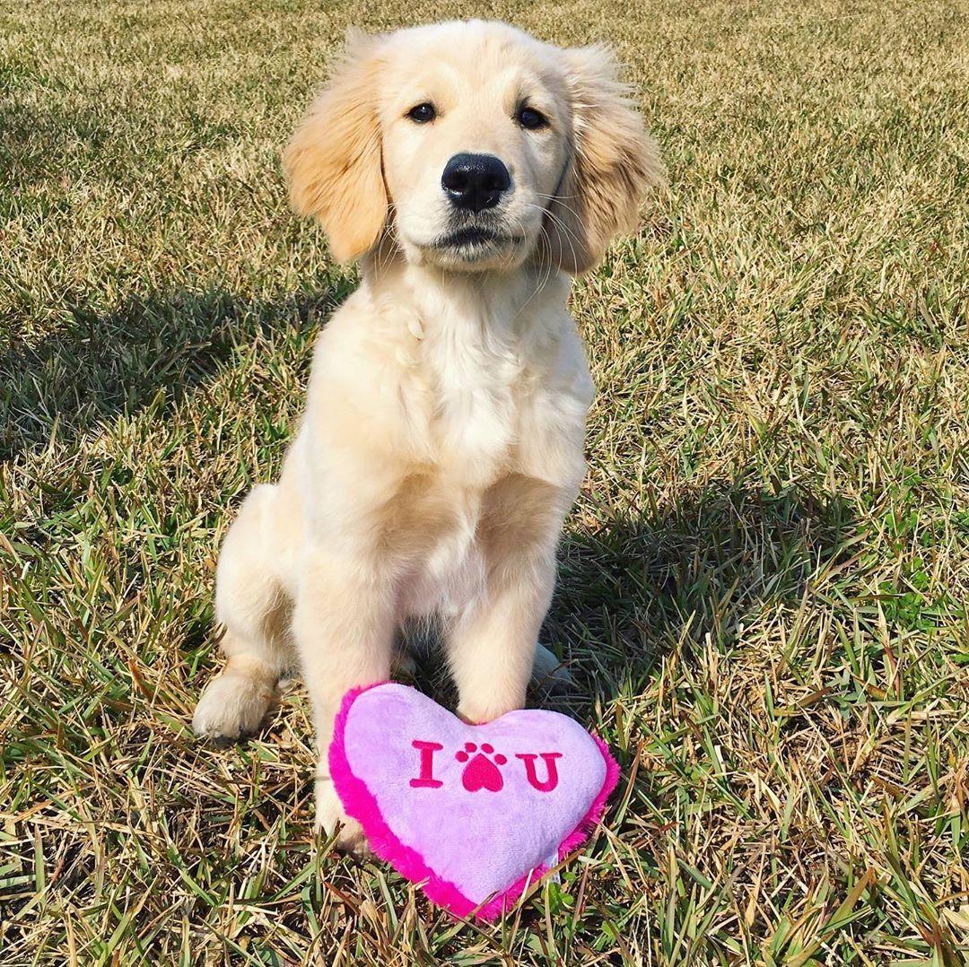 Jackson The Golden On Instagram Happy Valentine S Day