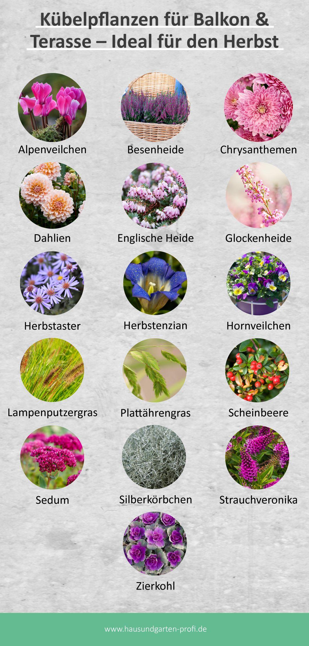 Herbstzeit Die Richtigen Kubelpflanzen Fur Den Balkon Im Herbst In 2020 Kubelpflanzen Pflanzen Garten Pflanzen