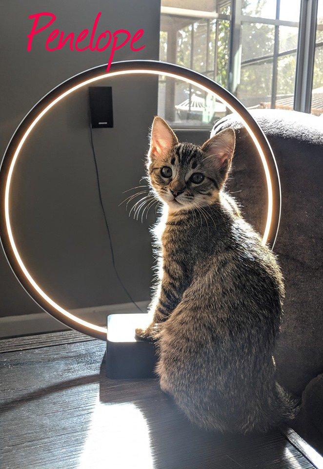 Itsie Bitsie Rescue on Twitter Rescue, Kittens, Adoption
