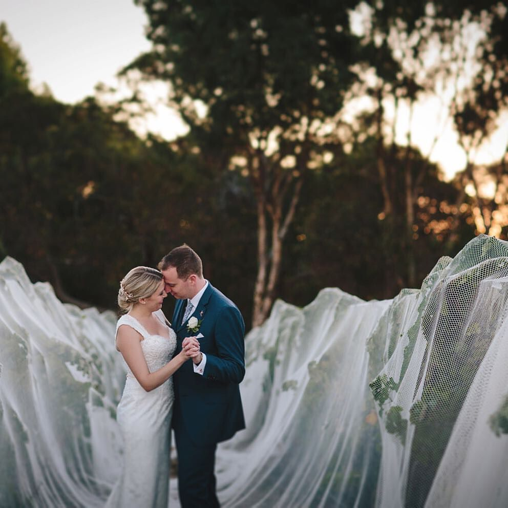 wedding packages western australia%0A Vineyard wedding photoshoot  Arimia winery Margaret River  Western Australia   Dusk  Blue Groom