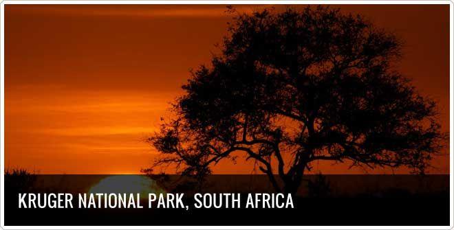Bucket  List: Kruger National Park, South Africa