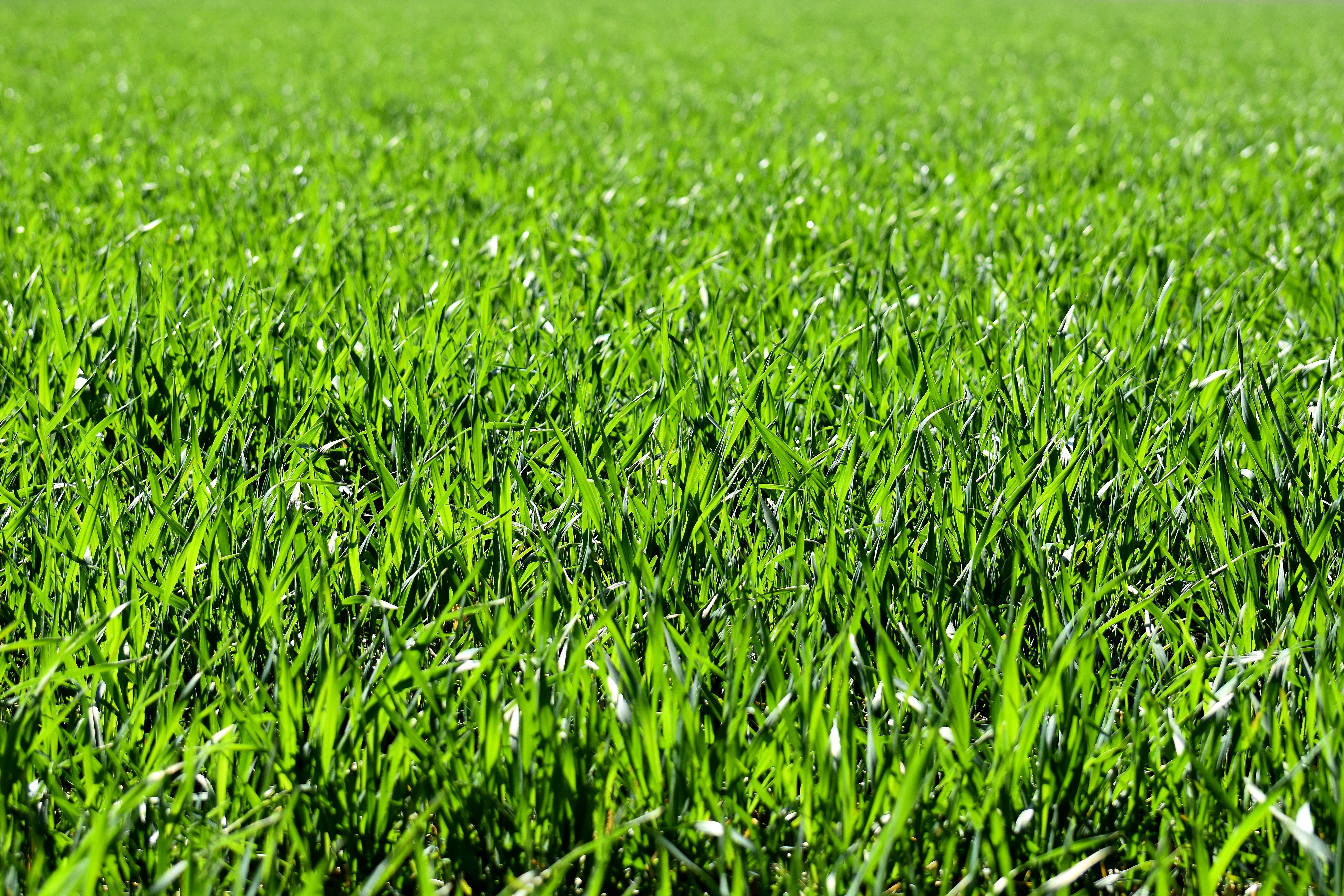 Coastal greens lawn care does maintenance on various