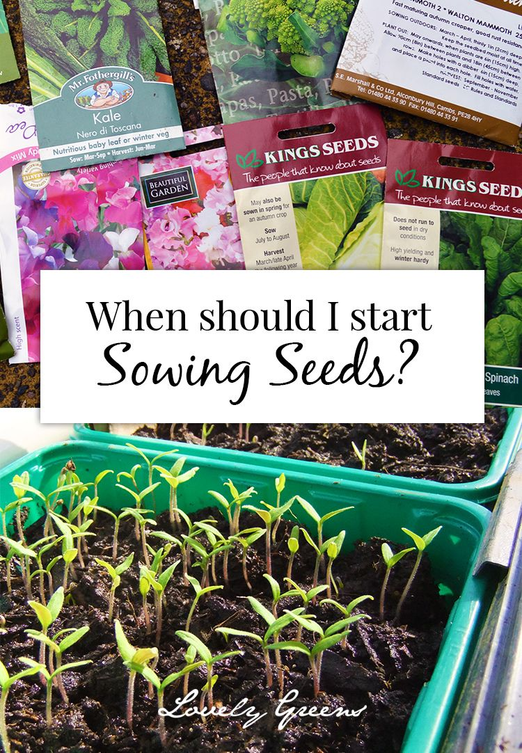 When Should I Start Sowing Seeds A List Of The Earliest Ones To