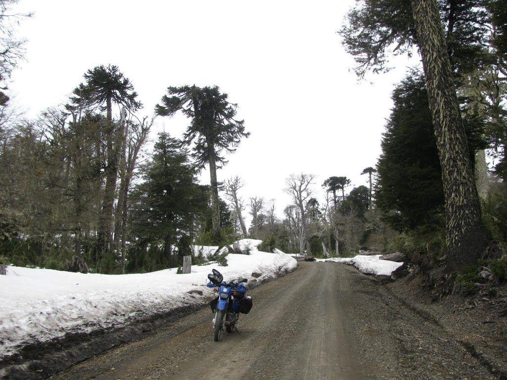 Paso a Chile via Paso Icalma, Longuimay, Región de la Araucanía, Chile