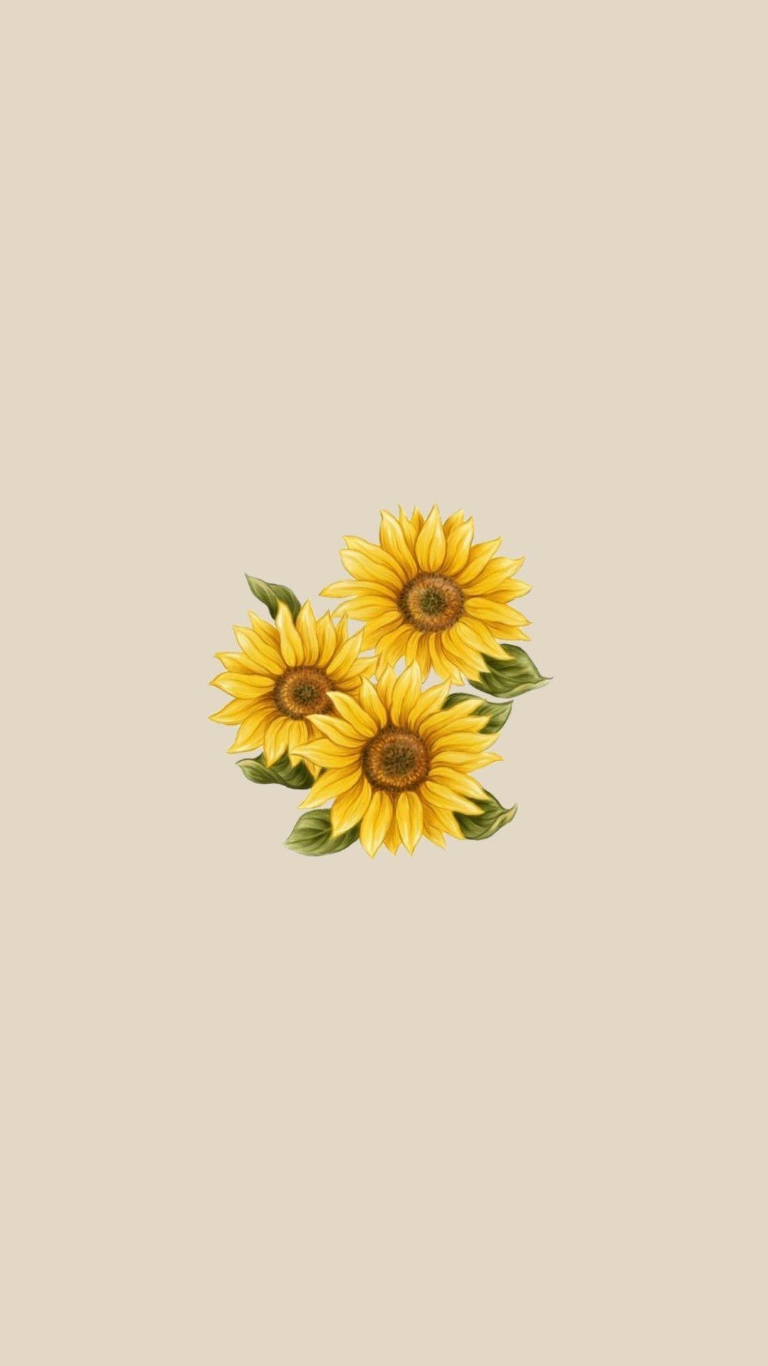 Pin By Dri Gibelini On Wallpaper Sunflower Wallpaper Yellow Wallpaper Sunflower Iphone Wallpaper