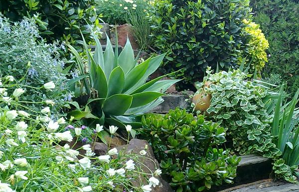 Guia de jardin. Blog de jardinería y plantas. Jardín en casa.: Crear el jardín