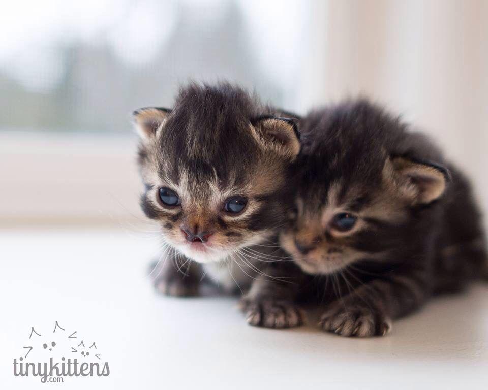 Tinykittens.com