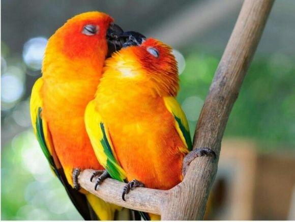 Los Animales Saben Como Demostrar Amor...