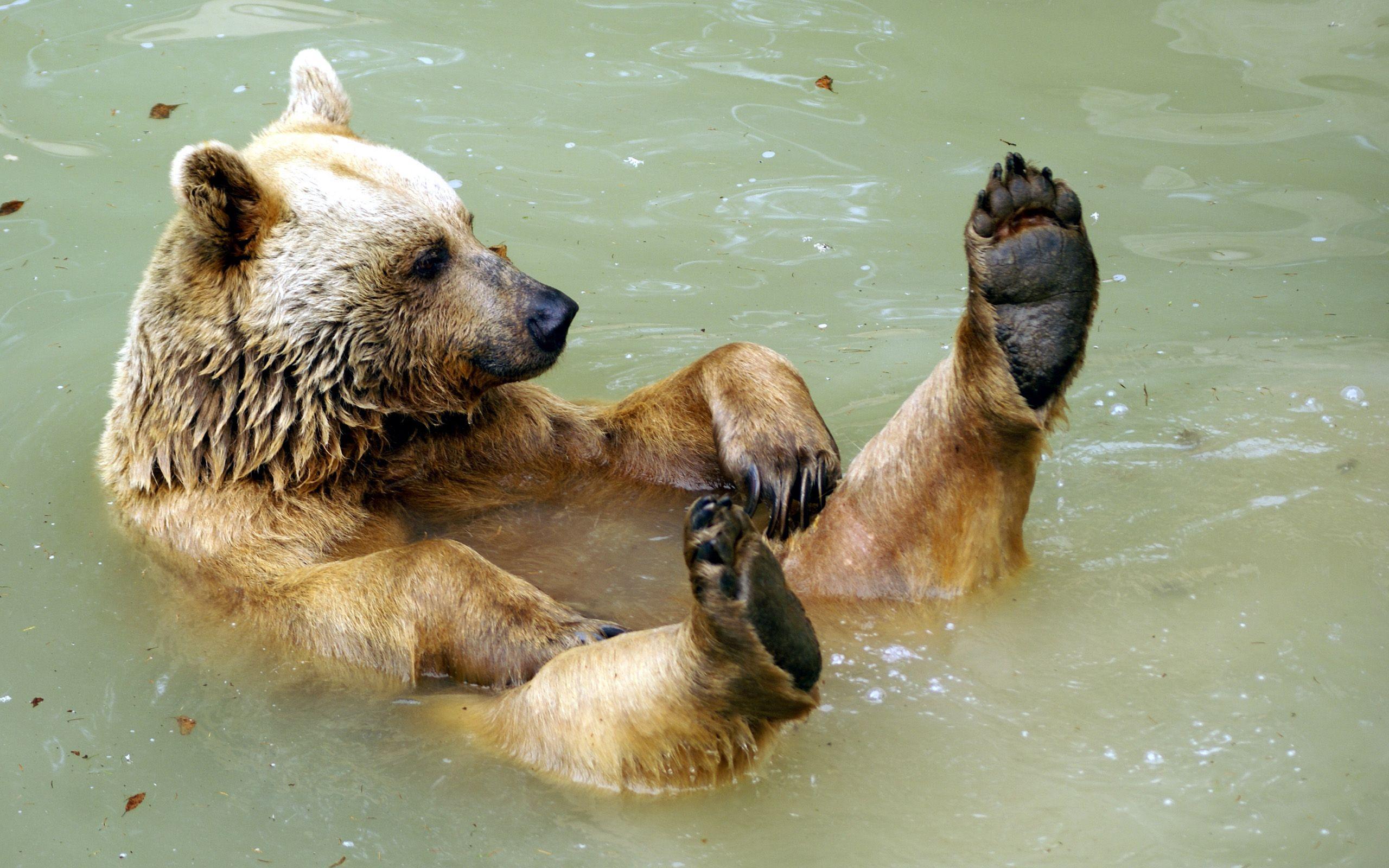 Картинки животные умываются водой