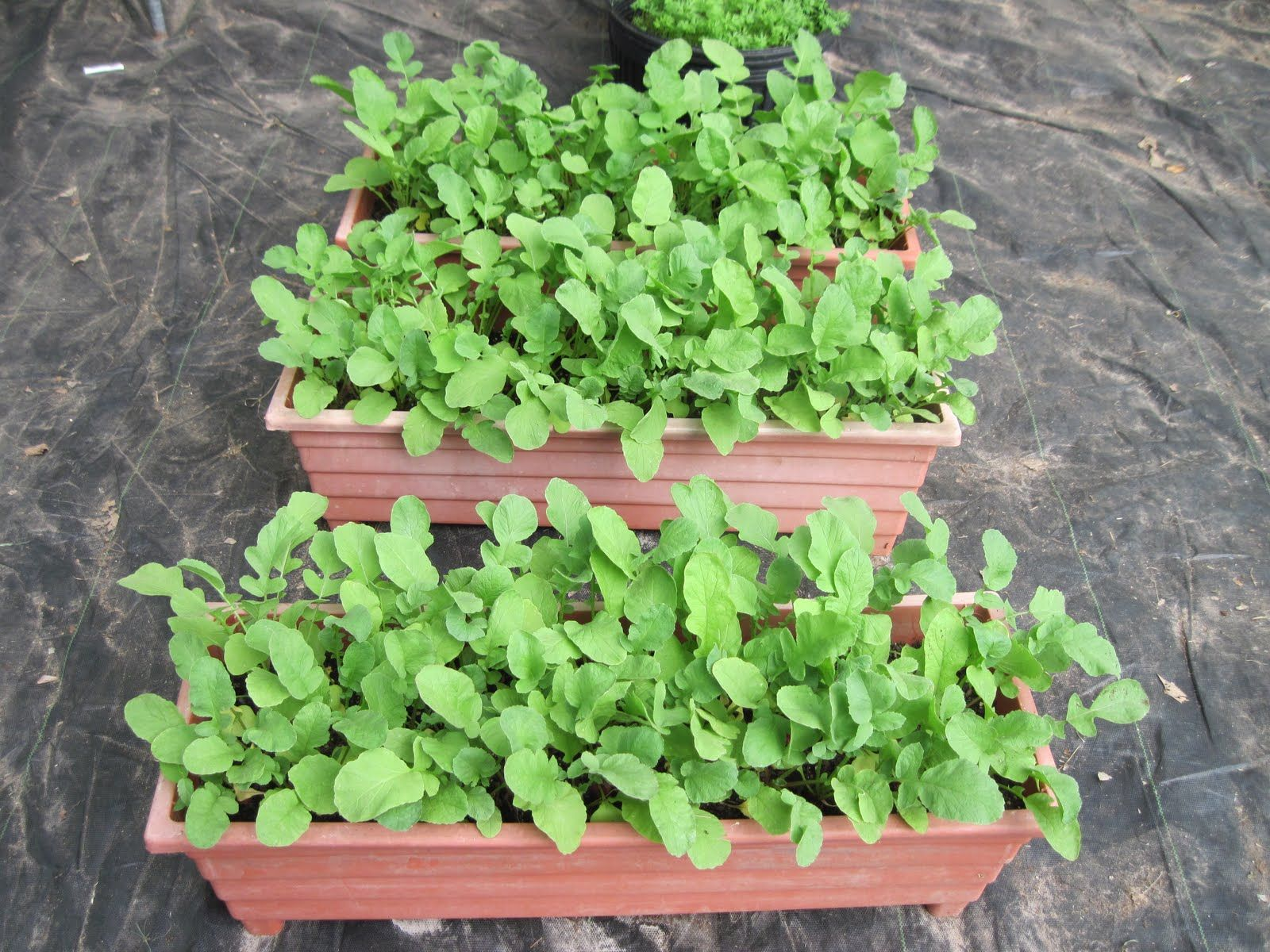 Container Gardening 15 Best Vegetables That Grow Well In A 400 x 300