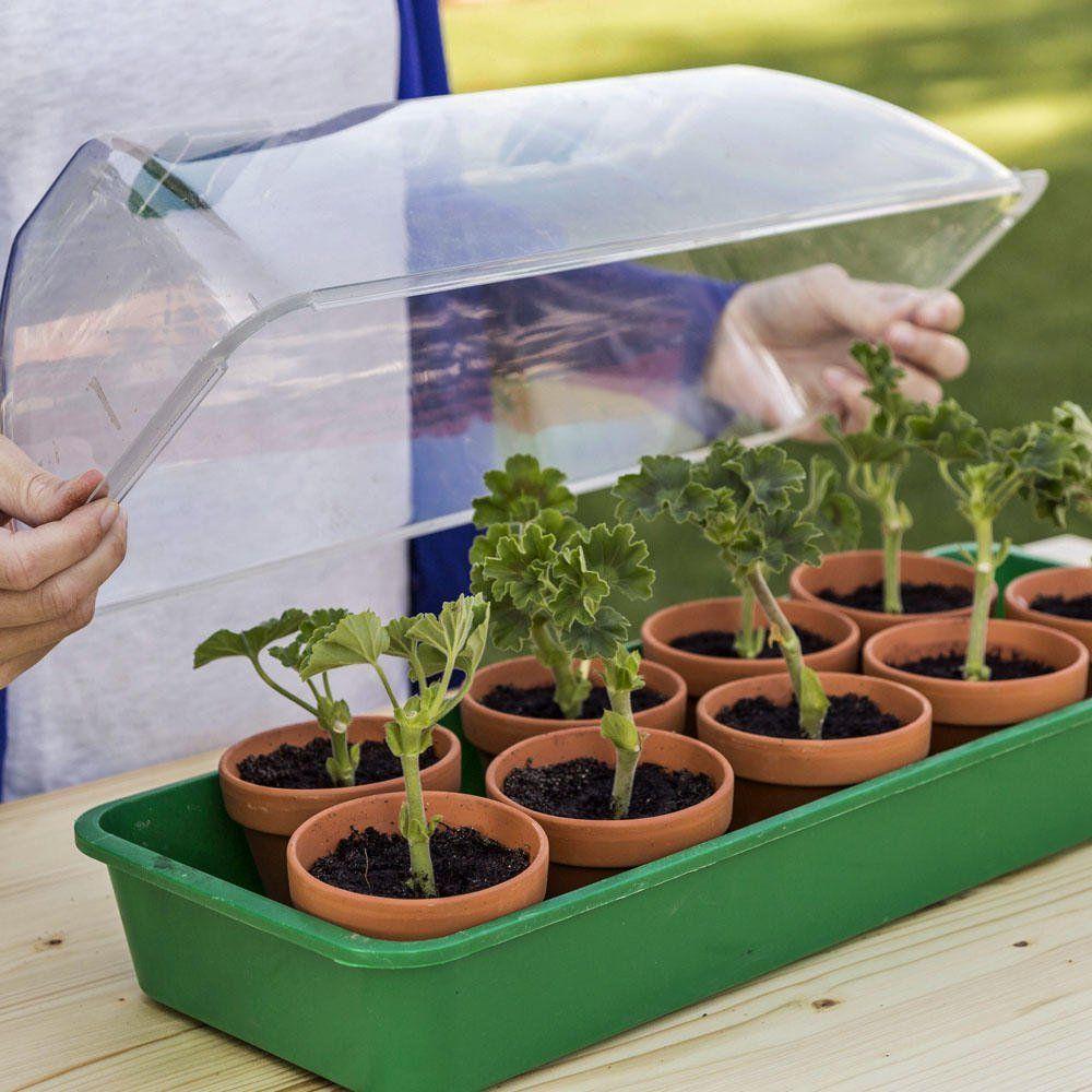 Pelargonium Pelargonien Pflanzen Januar Aussen Knnen Die Sie Im5 Pflanzen Die Sie Im Januar Aussaen Konnen Pela Flower Garden Care Garden Care Plants
