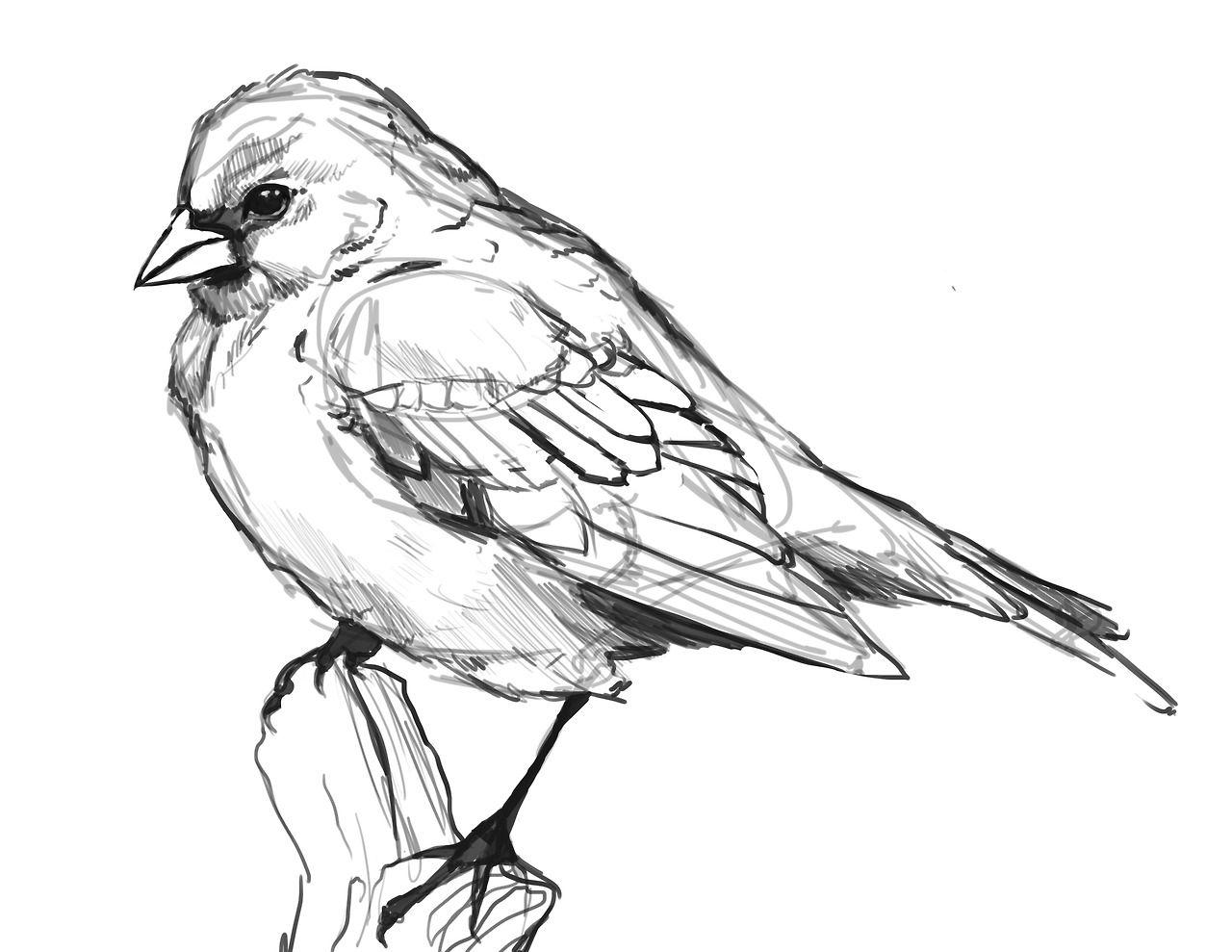 Tumblr Mm6yapbenf1sprvtjo3 1280 Jpg 1280 989 Vogels Tekenen Dieren Illustratie