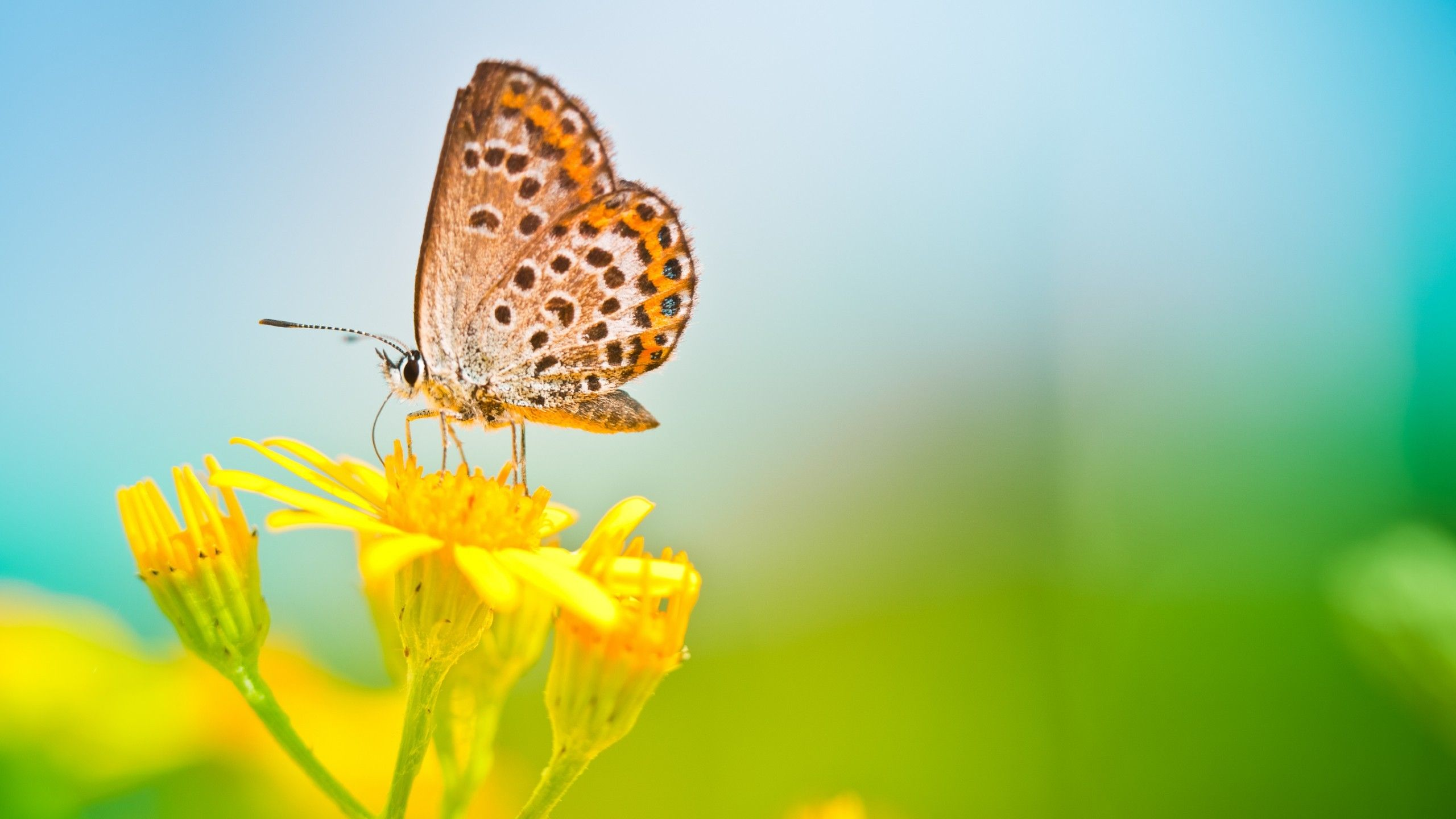 Butterfly Sitting At Yellows Flowers