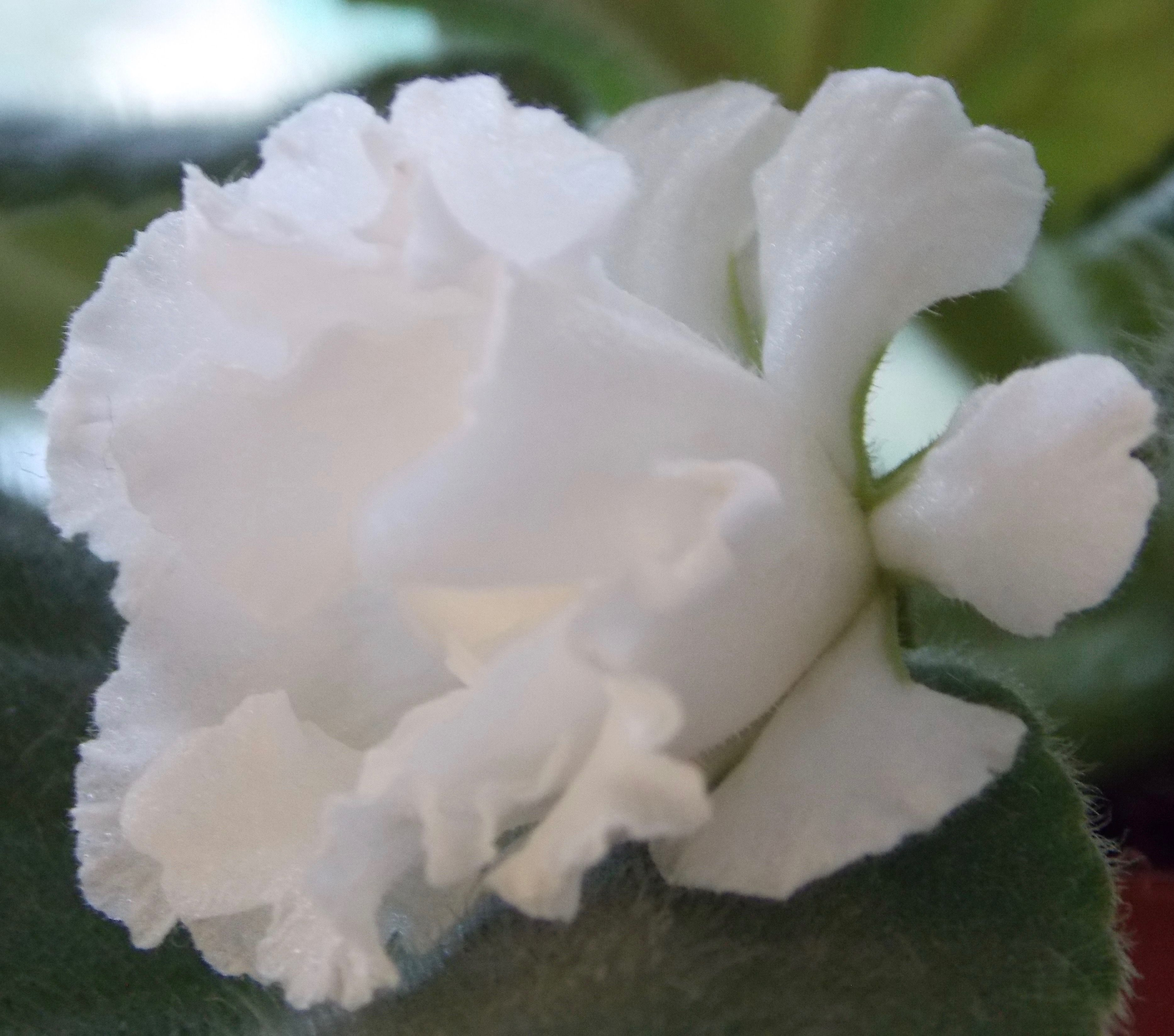 Pin By Martha Lewis On White Flowers Garden Pinterest