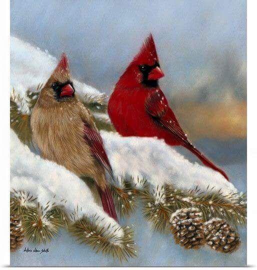 Pin By Steeleaway On Christmas Beautiful Birds Cardinal Birds Pretty Birds