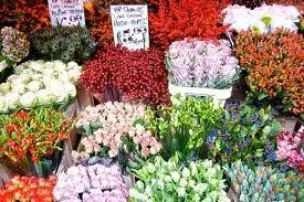 Columbia Road Flower Market Www Albertalagrup Com Columbia Road Flower Market Flower Market Columbia Road