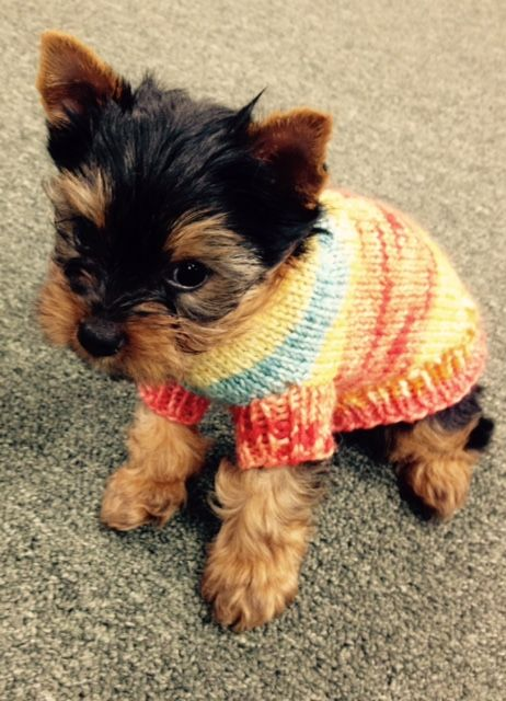 Tricot S First Dog Sweater For Teacup Sizes Starla Knits Small