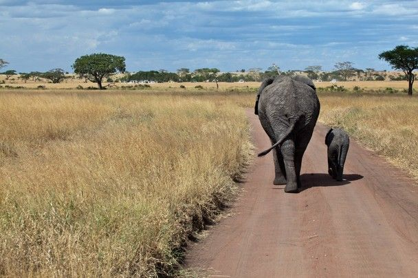 Mom And Baby Taking A Walk In The Serengeti African Animals
