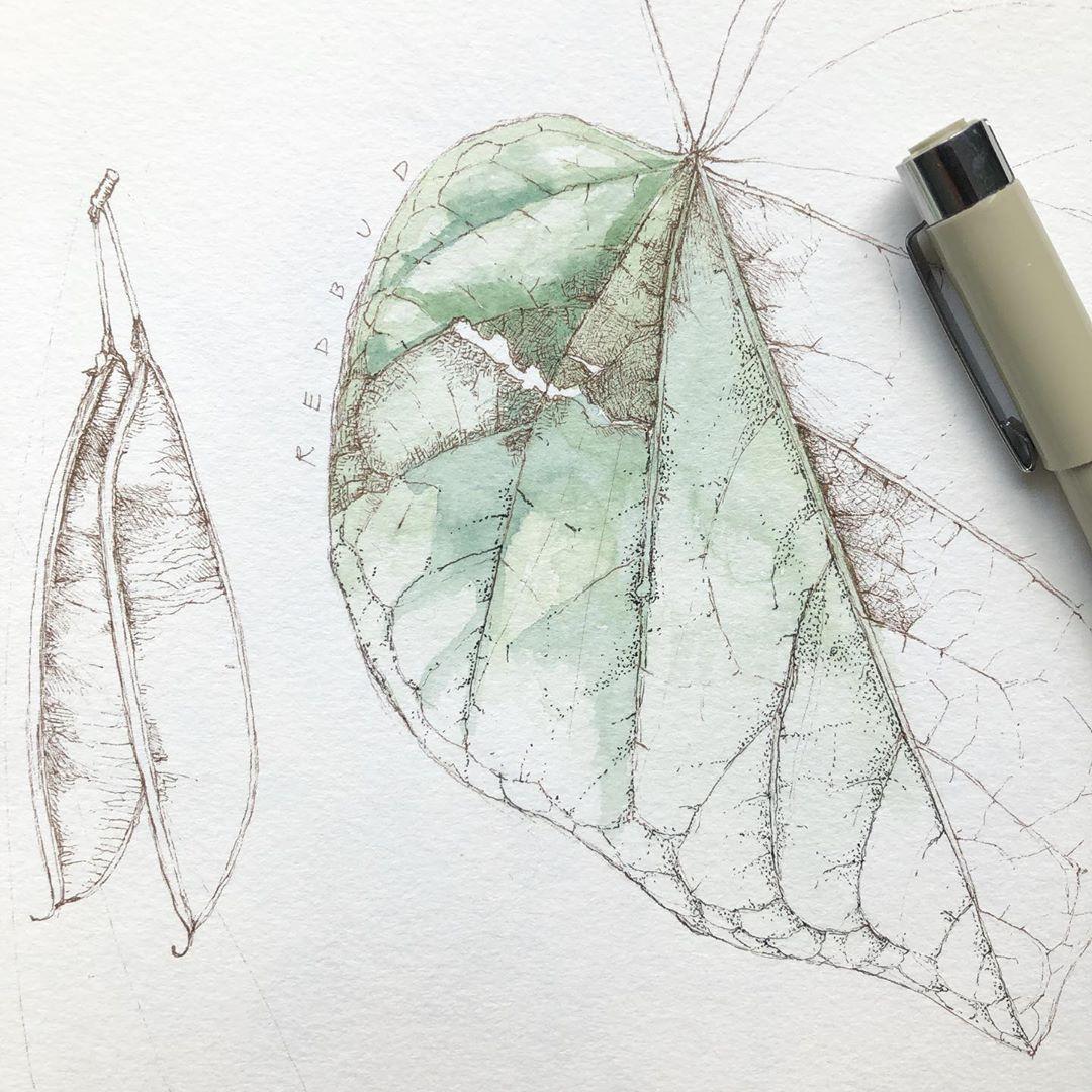 Lara Gastinger Instagram Closeup Of The Leaf Study In