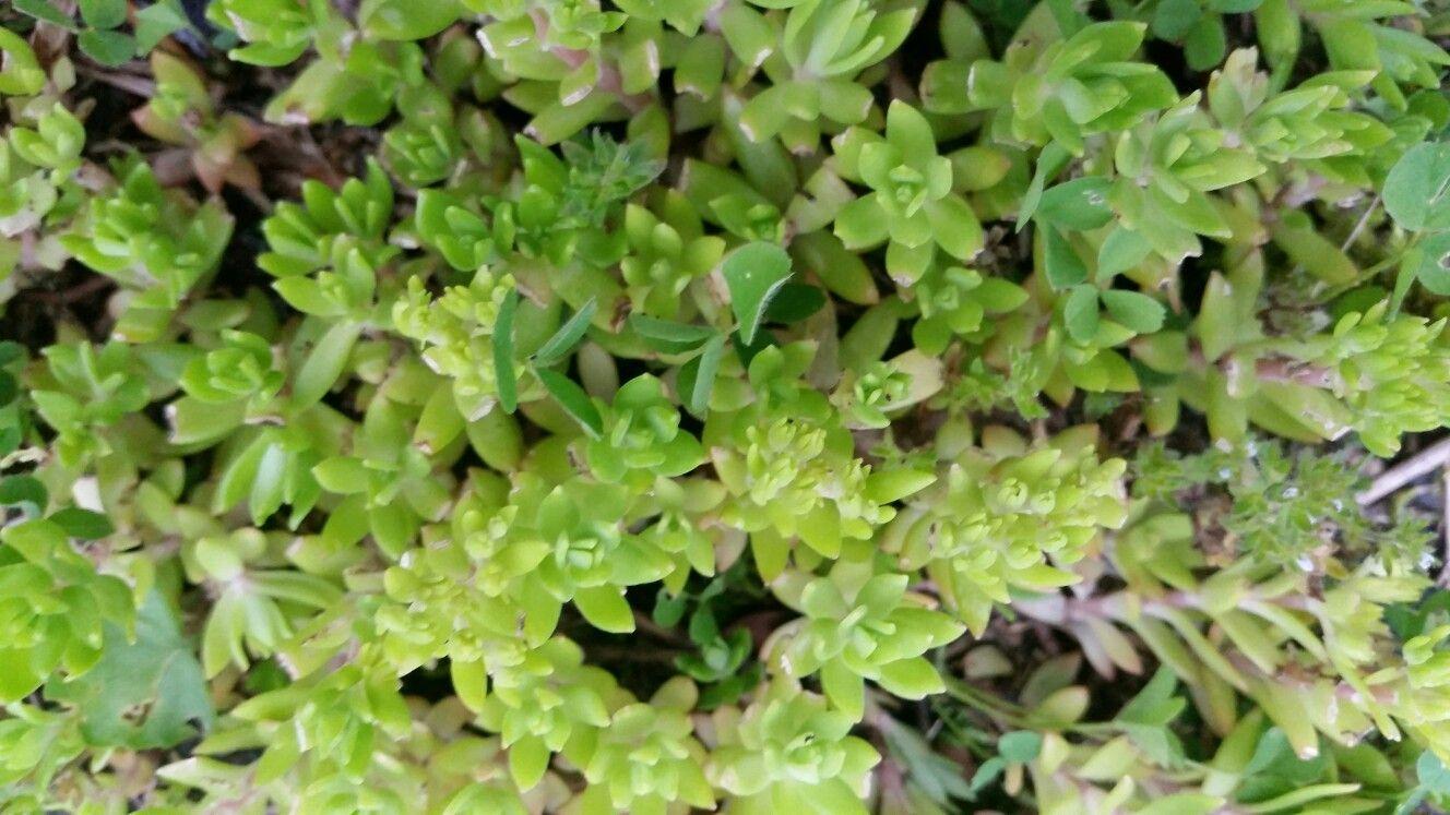 westvirginia welchwv Grass textures, St augustine