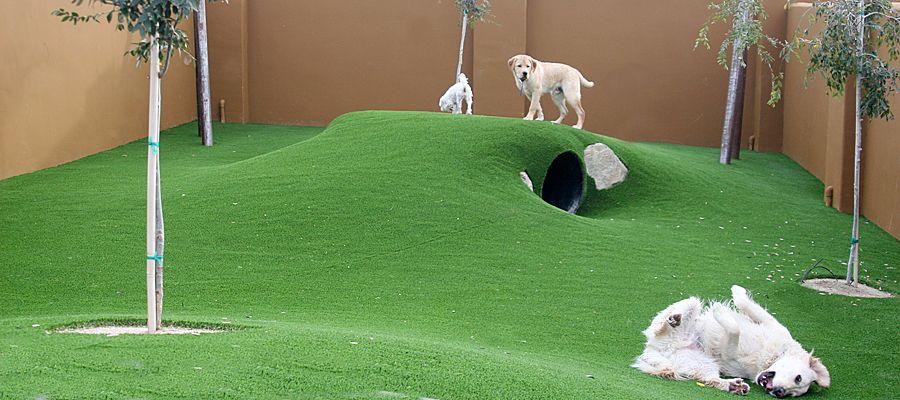 I Love The Rolling Hills Http Www Coolenews Com Dog Training Indoor Dog Park Dog Daycare Dog Playground
