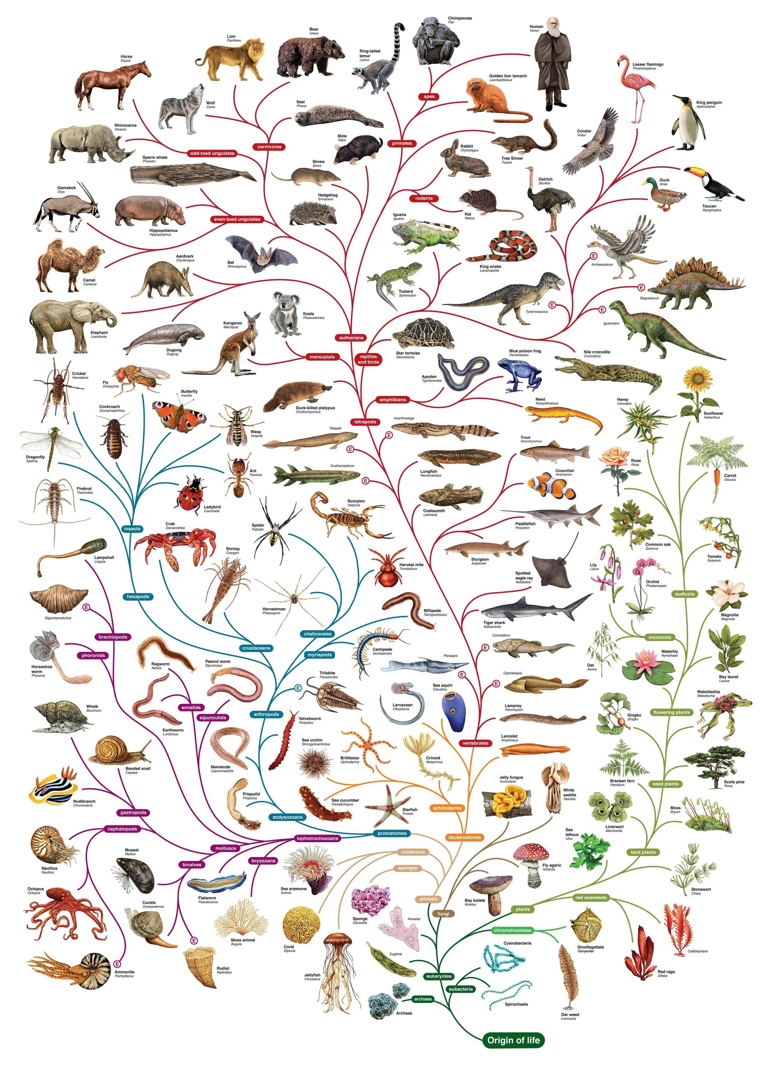 Follow Evolution And Explore The Variety Of Life On The Planet With The Tree Of Life Phylogenetic Tree Darwin Tree Of Life Science Biology
