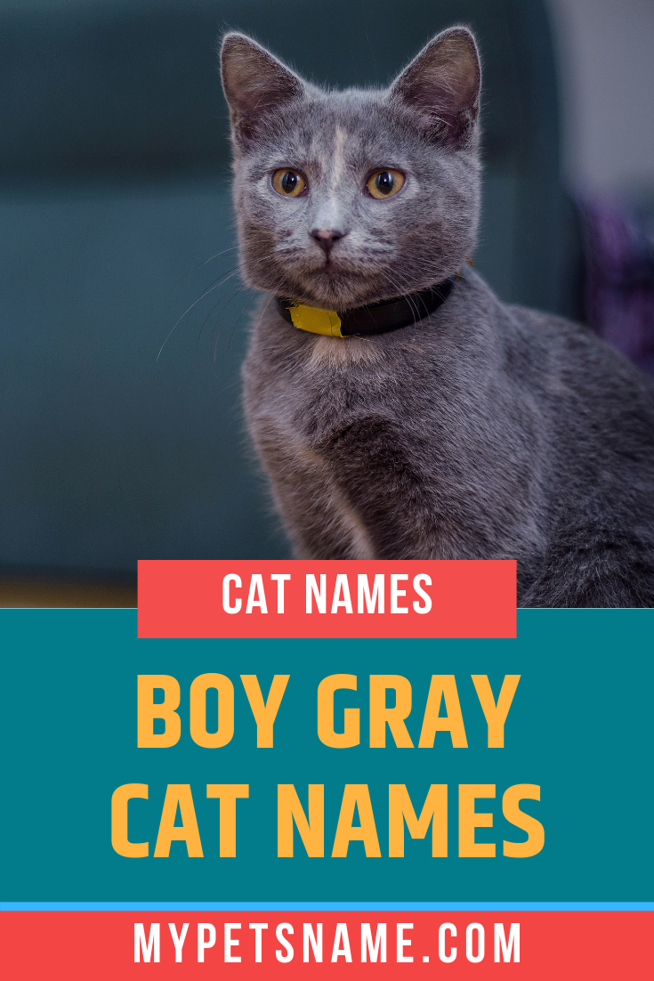 Silver And Gray Colored Elements Also Make Fantastic Gray Cat Names Like Mercury And Iron These Represent The Exqui Grey Cat Names Cat Names Kitten Names Boy