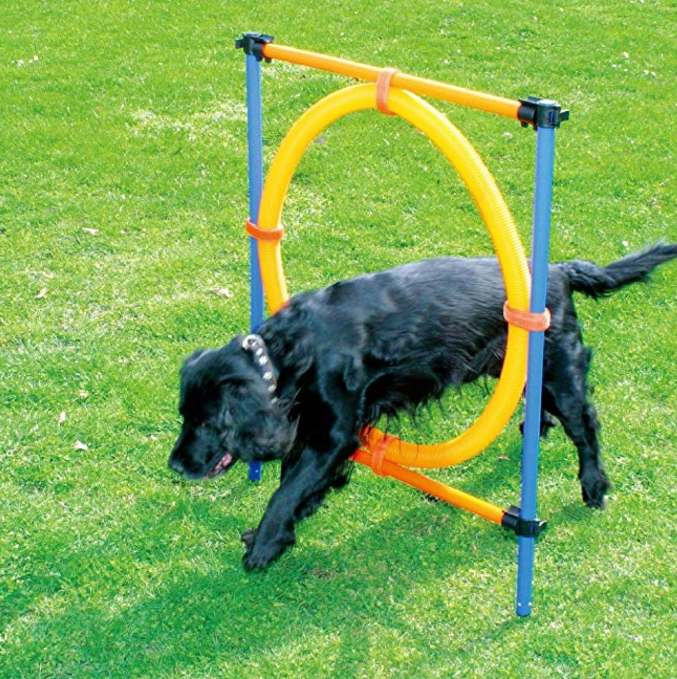 Looking For A Fun Dog Toy Grab Some Agility Stuff For The Yard