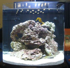 Setting up your first nano reef tank salt water aquarium for First fish tank
