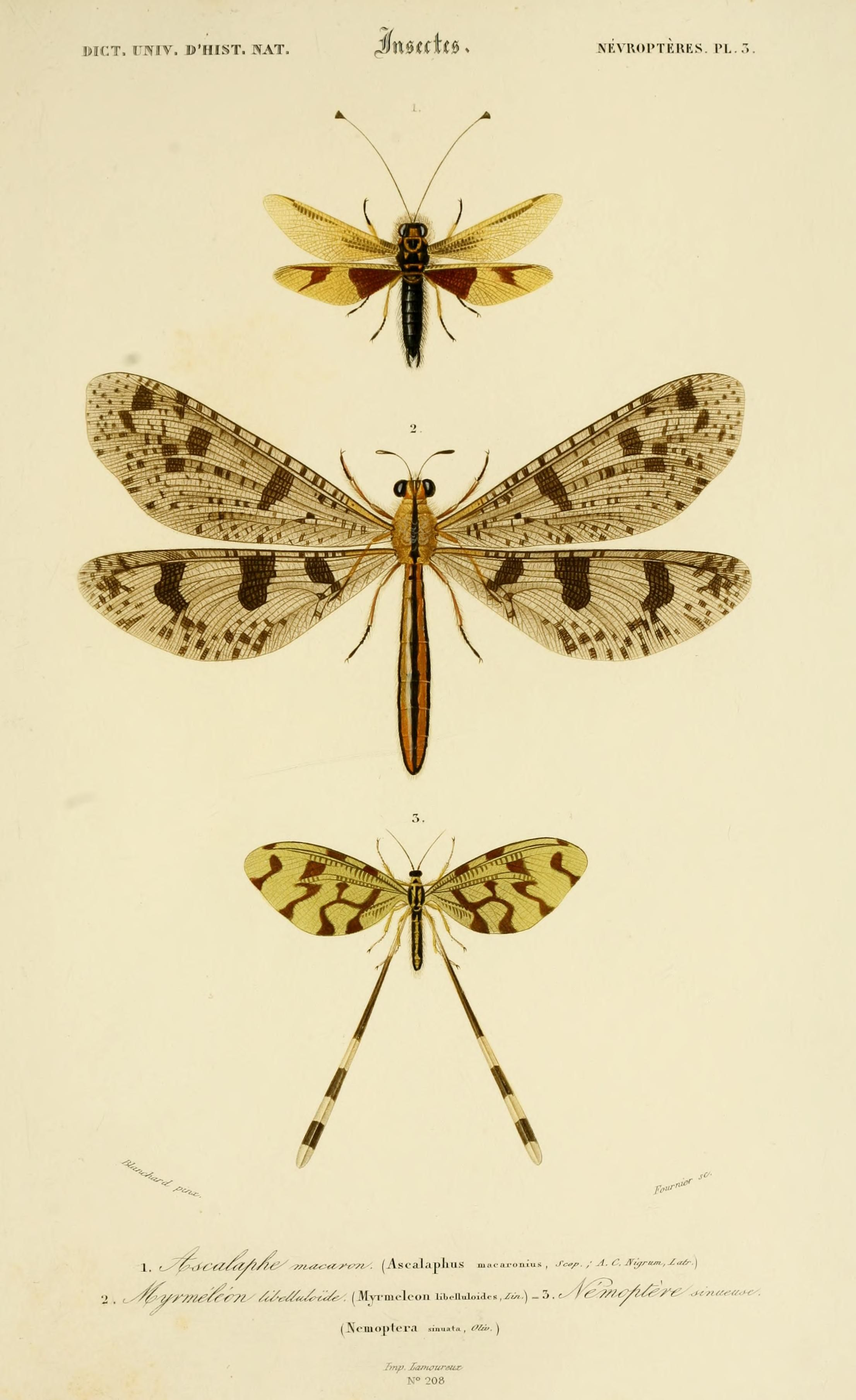 insect | Print Plates - creative study | Pinterest | Insectos ...