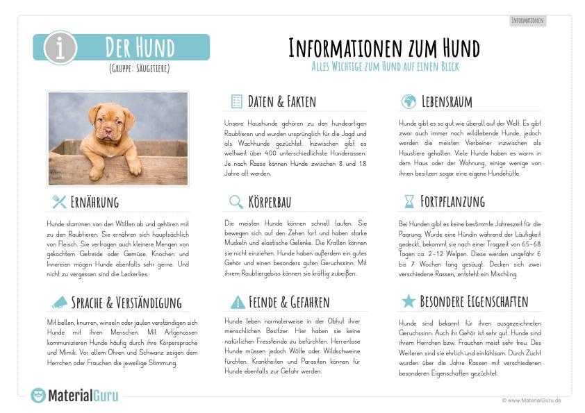 Hund Informationen
