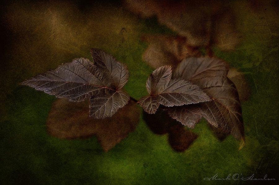 leaves by Mark_O_Hanlon on 500px