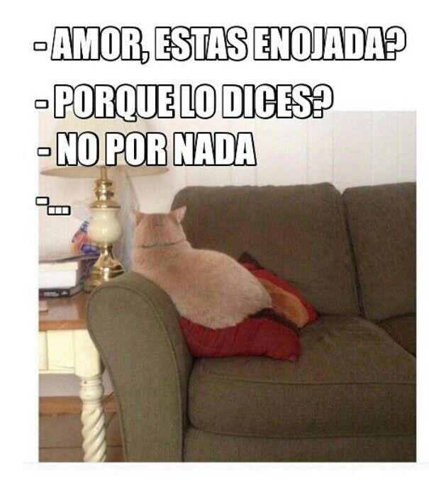 Amor Estas Enojada Meme Gato Gatitos Divertidos Gatos