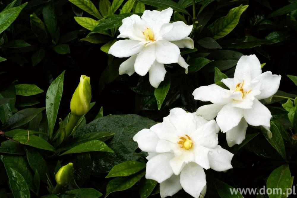 Skrzydlokwiat Plants House Plants Organic Gardening Tips