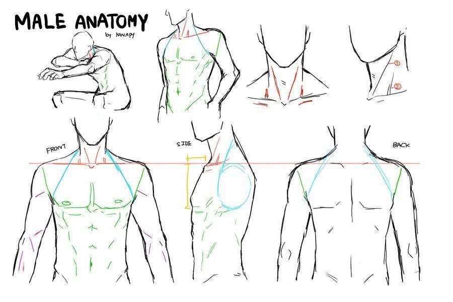 IeoePrVD60I.jpg (900×600) | tutor | Pinterest | Anatomie, Vorlagen ...