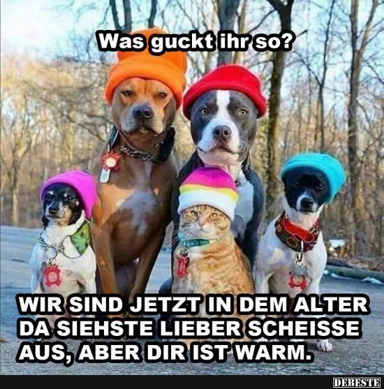 Was guckt ihr so? | Lustige Bilder, Sprüche, Witze, echt lustig #animalrescue
