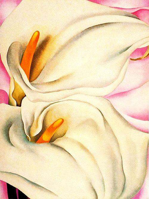 Flores de Georgia O Keeffe  Arte  Pinterest  Calas Los tipitos