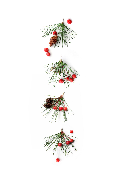 Jingle Bells Still Mary Jo Hoffman In 2019 Christmas