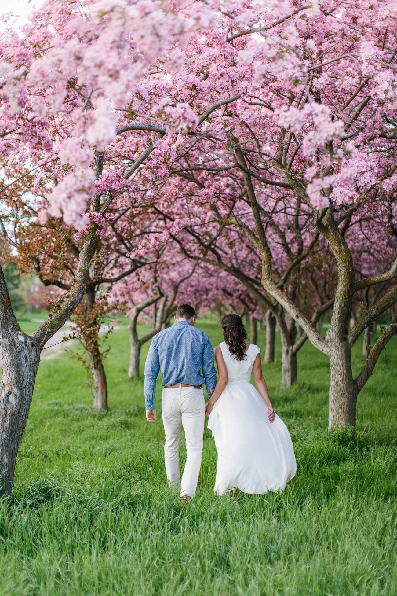 Sweet Apple Blossom Engagement Photographs In Ottawa Grace Gold Studio Engagement Photographer Apple Blossom Spring Photoshoot