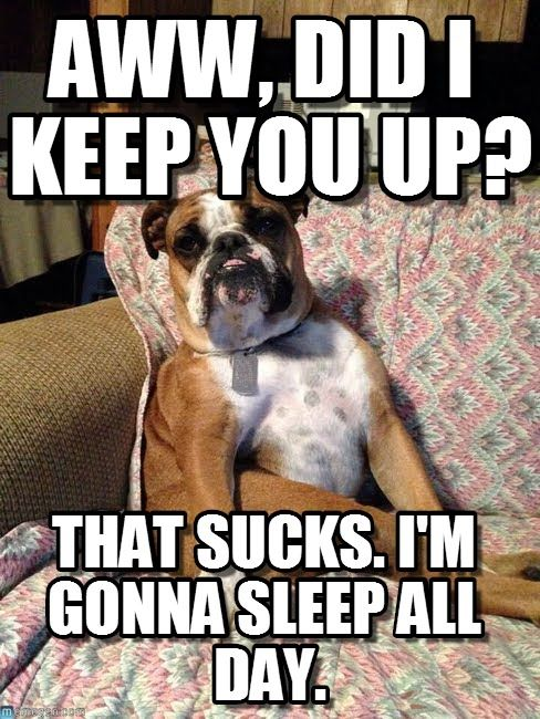Dog Sitting In A Chair Dog Quotes Funny Bulldog Funny Funny