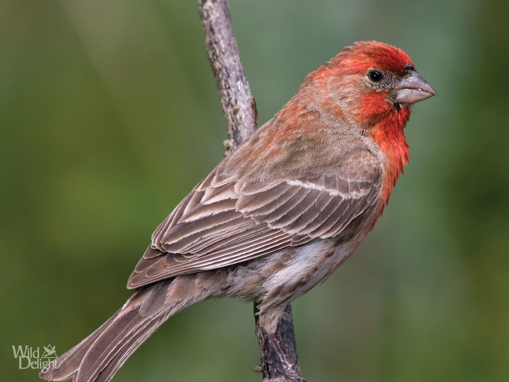 Top 7 different types of finches bird pet birds and bird top 7 different types of finches biocorpaavc