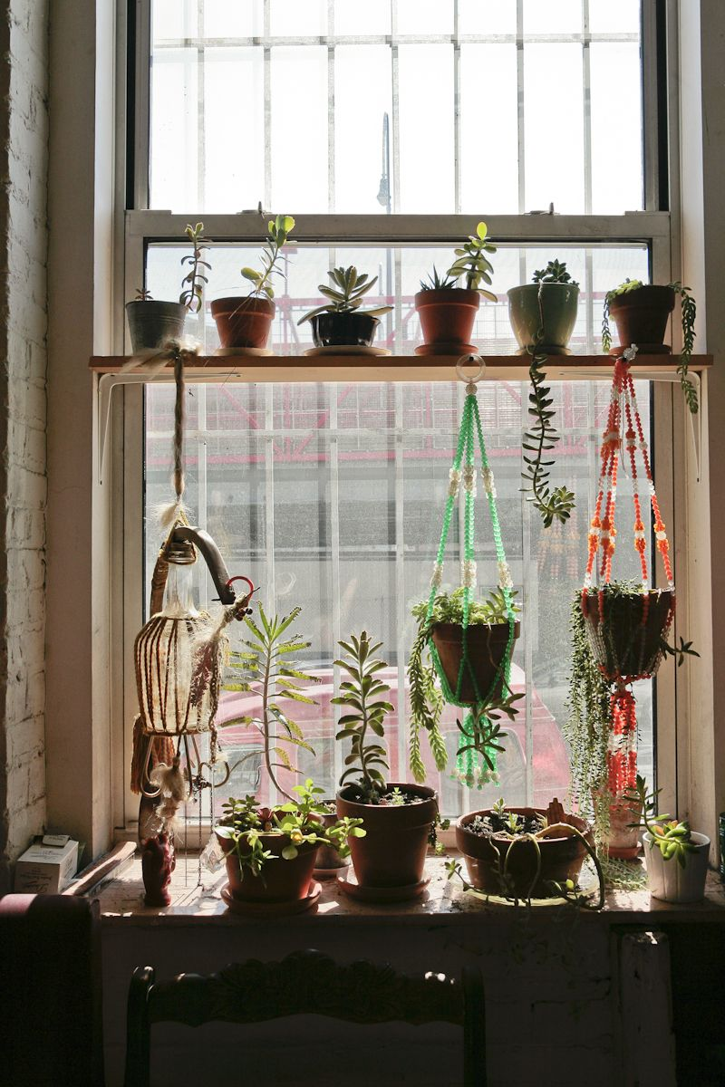 Succulent window garden garden shelves kitchen - How to hang plants in front of windows ...