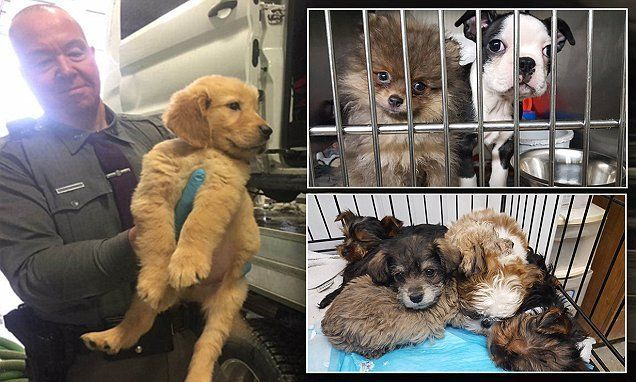 A Ruff Ride 103 Dogs Rescued When A Truck Flips In Upstate New