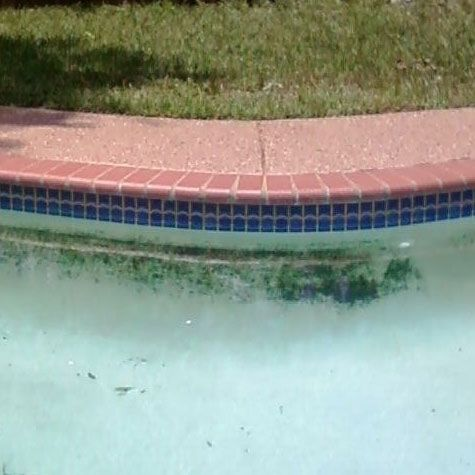 How to kill black algae in your swimming pool hiliarious - Black algae removal swimming pool ...