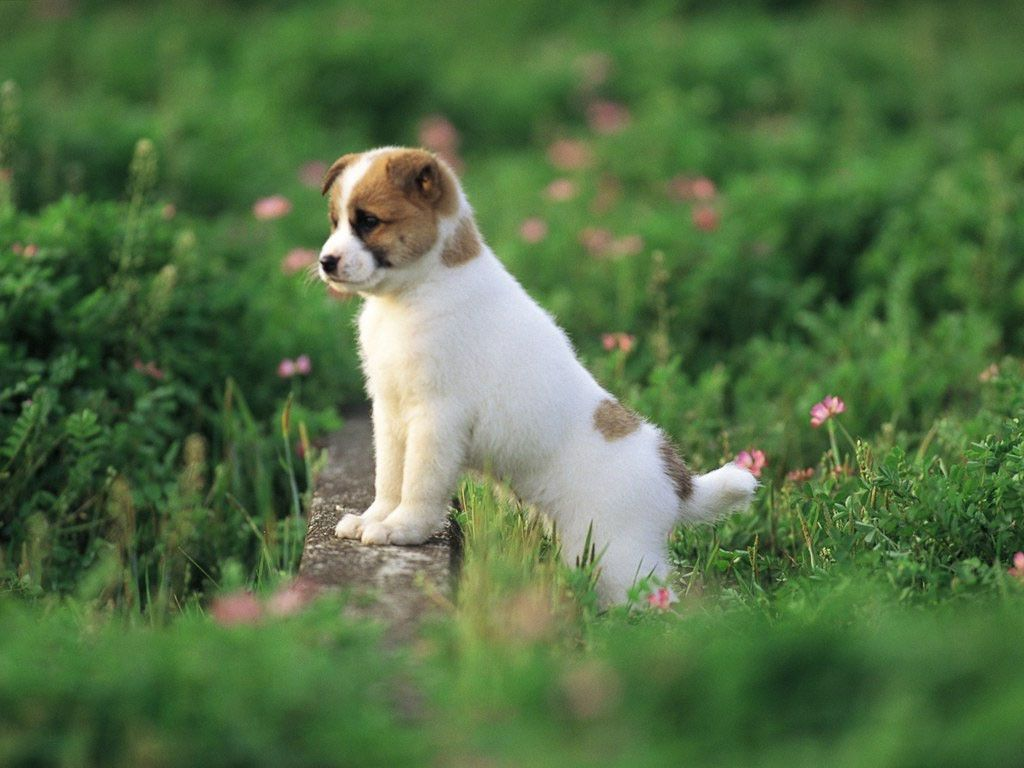 Hd wallpaper dog - Cute Puppy Wallpapers Hd Android Apps On Google Play