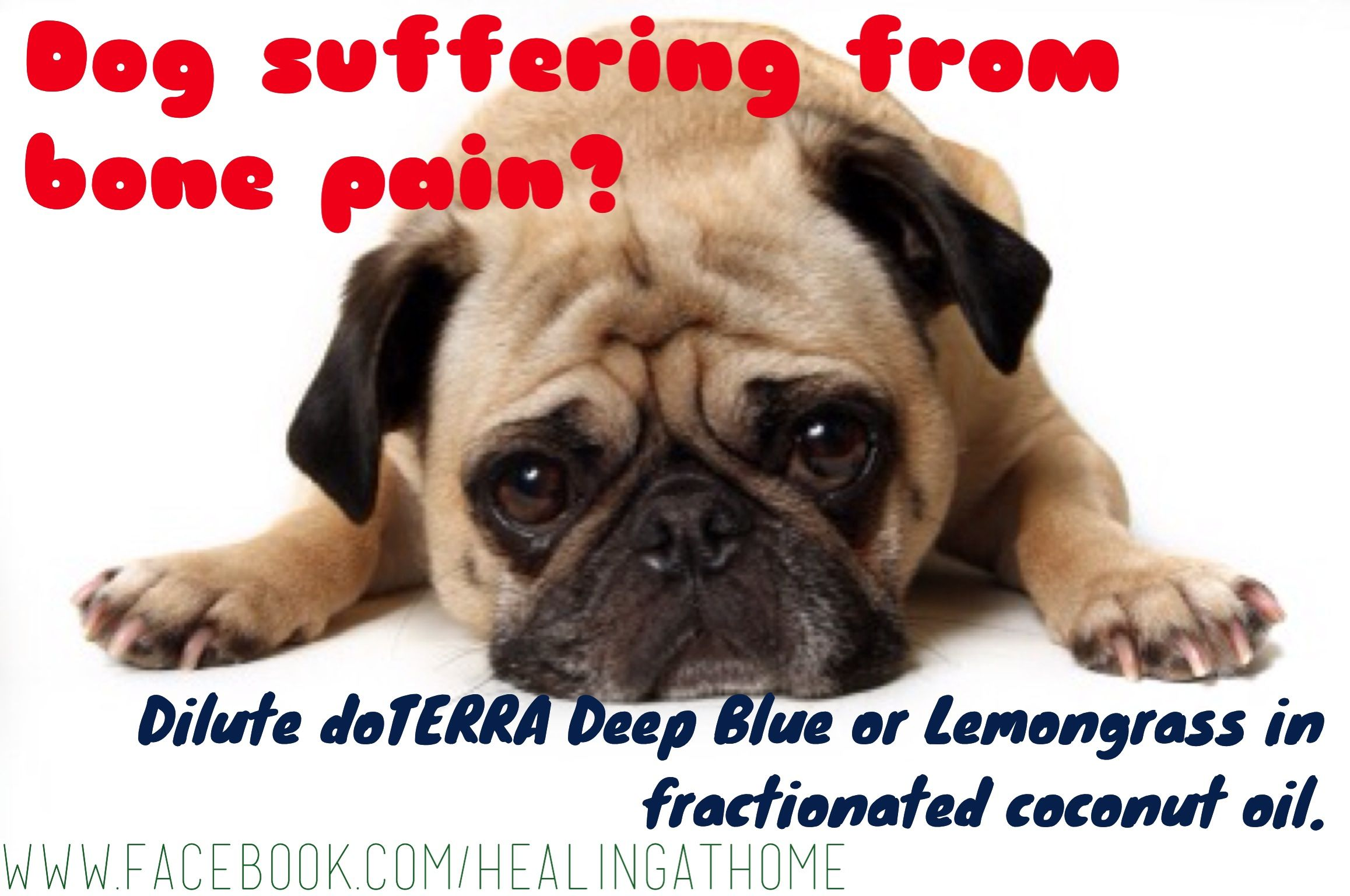 Pin On Doterra For Animals