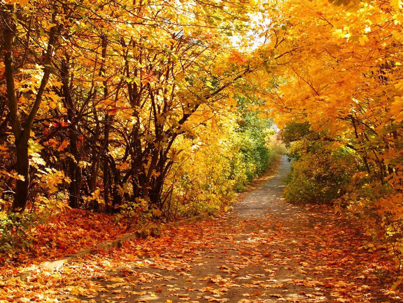 Most Beautiful Fall Scenes Beautiful Autumn Scenery