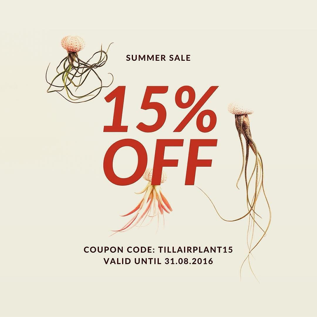 SUMMER SALE!! #tillherbacaeli #tillandsia #luftpflanzen #airplants #greendesign #airplantsofinstagram #iloveairplants #interiordesign #summersale #greendesign #sale
