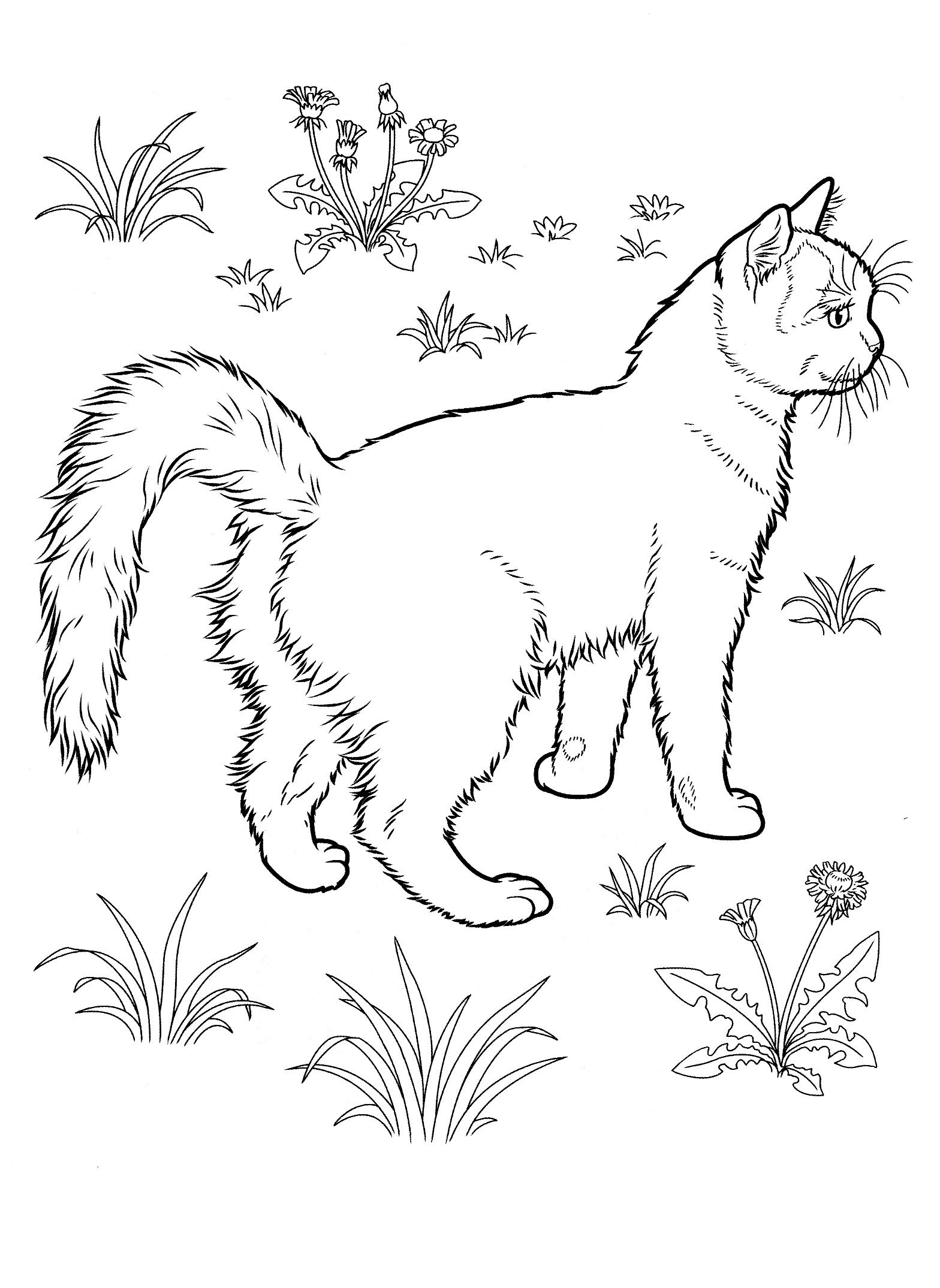 cat coloring pages for teens and adults animais felinos Cat W cat coloring pages for teens and adults